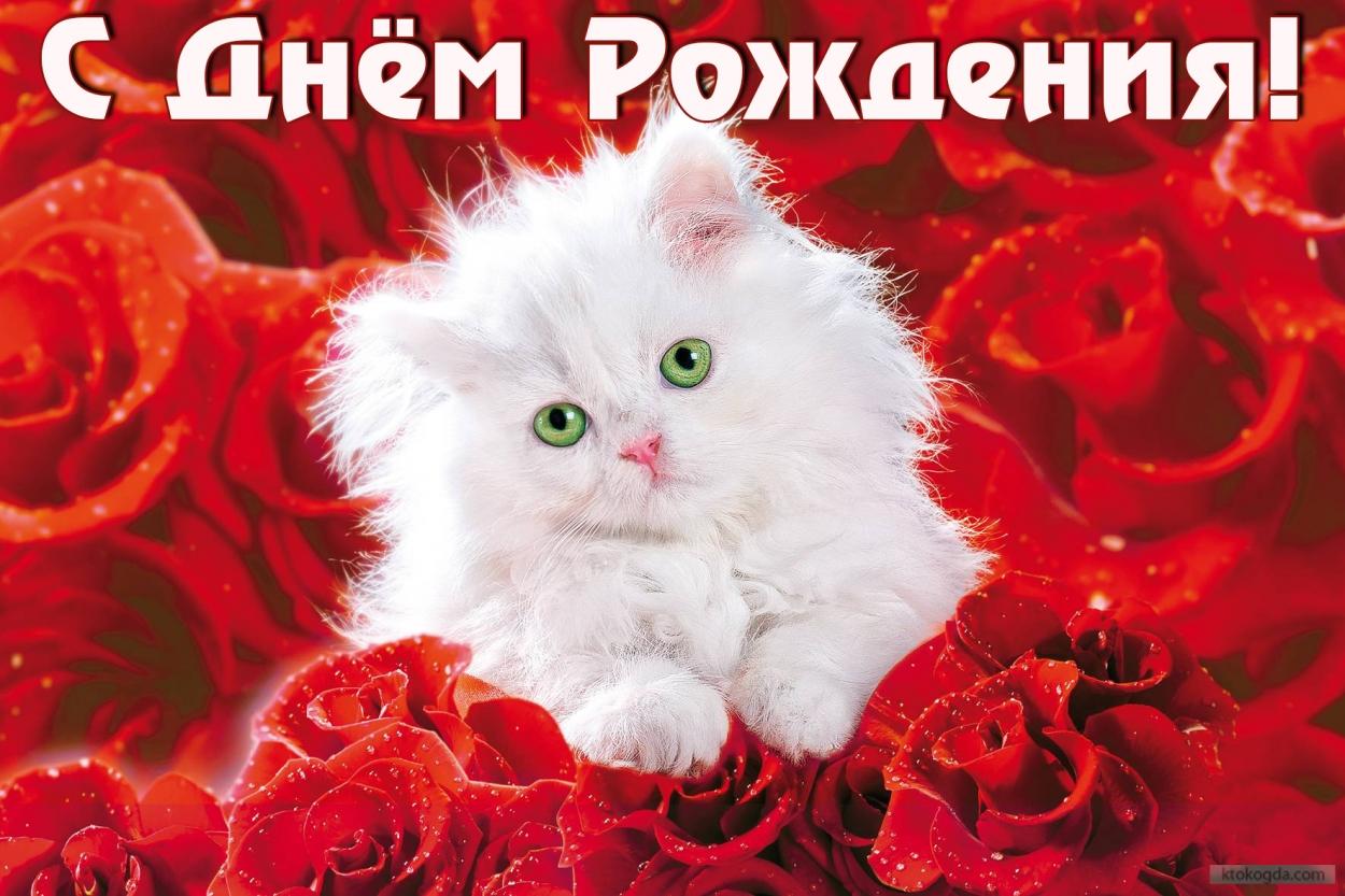 otkritka-na-den-rozhdeniya-s-kotenkom-i-rozami.orig_.jpg