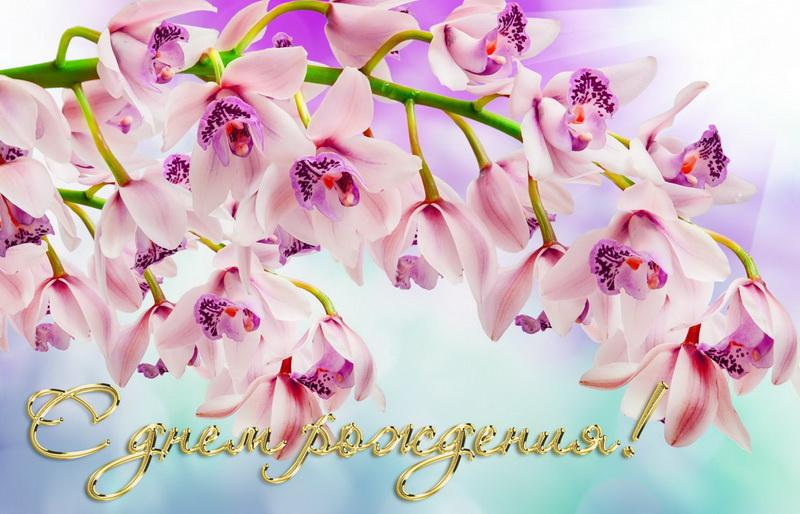 Др_орхидеи.jpg