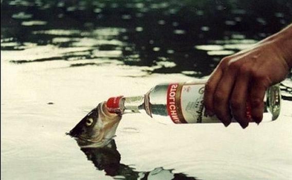 рыба.png