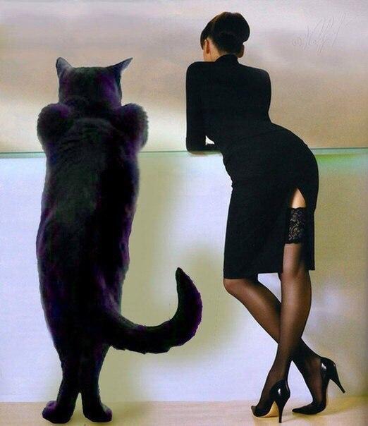 Знаем, что собака друг человека, а кем нам кот приходится ...