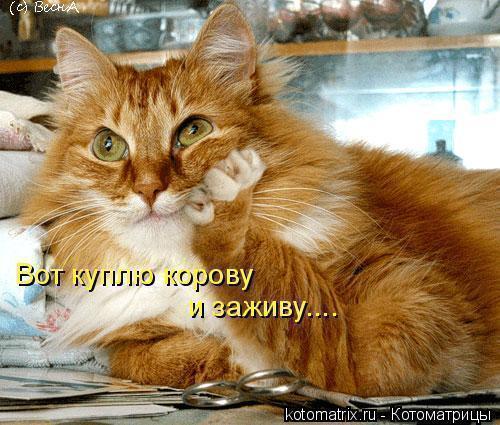 вот_куплюкорову._._.jpg