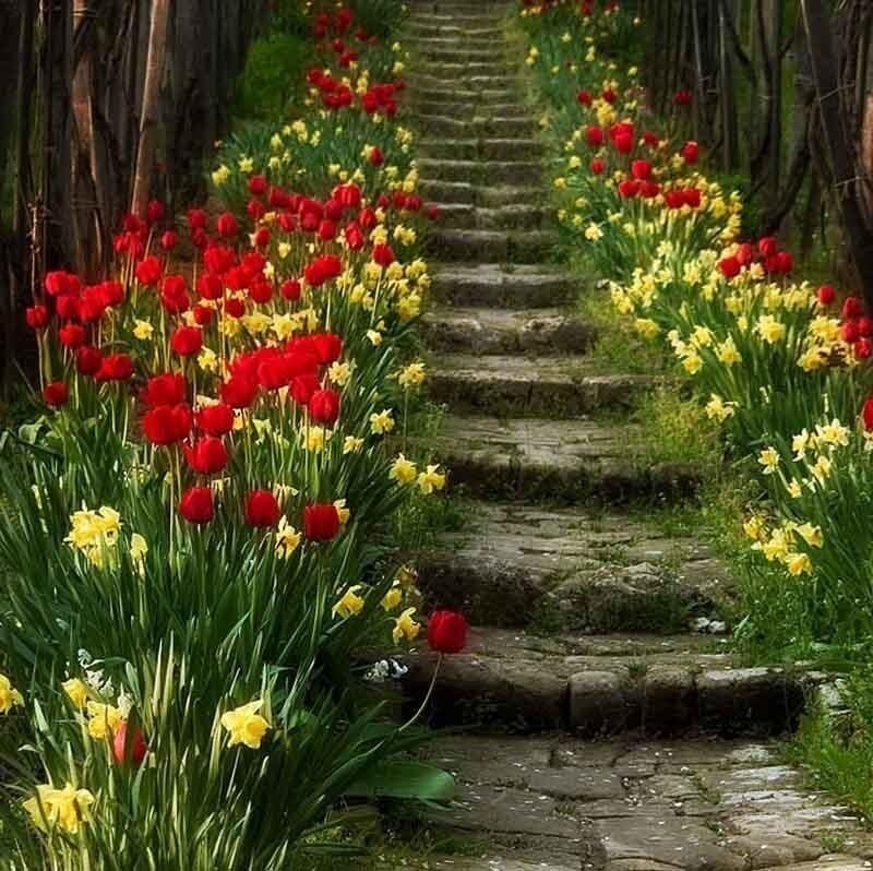 тюльп.лестница_.jpg